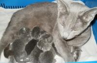 17 июля наша Шура стала мамой!