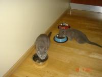 24 июля в новый дом отправились Джой и Келли!
