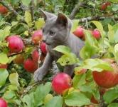 18 сентября в новый дом уехал котенок Келвин!
