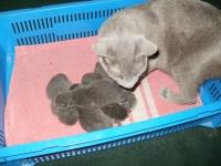 21 октября Криста родила пятерых котят :)
