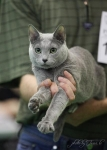 18-19 мая 2013 года очередная победа на Всемирной выставке котов в Таллинне!