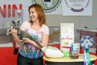 Февраль 2014 года в Уфе вышла передача о русских голубых кошках.