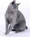 17-18 марта Мировая выставка в Риге! WCF WORLD CAT SHOW 17-18/03/2012
