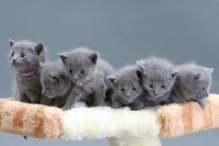 April 1 Сrista gave birth to 6 kittens :) / 1 апреля Криста опять мама: 6 котят :)