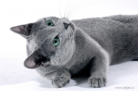 May 5-6 International Cat Show in Riga
