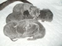 3 Июня наша Шура опять стала мамой!