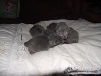 10 июня Зинка опять стала мамой :)
