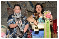 WCF Cat Show July 14-15, 2012. Moscow