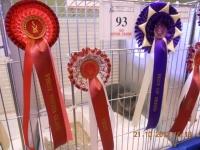 В Ирландии на выставке победил наш Макшутка :) Поздравляем Таню и её семью!