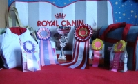 01-02.12.2012.  Grand Prix Royal Canin - Moscow !!!