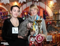 WCF Cat Show December 15-16. 2012. Dneprodzerzhinsk